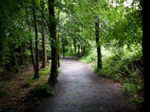 Rathwood forest walks