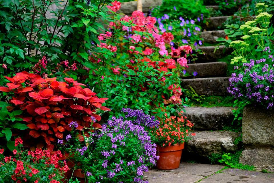 Wicklow Gardens Festival Garden Ftempo